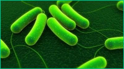 Нахождение в организме бактерии хеликобактер пилори¸ как утверждают научные исследования, является основной причиной развития гастрита с повышенной кислотностью