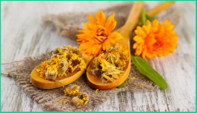 Календула — это яркий цветок, способный избавить от множества болезней