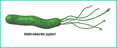 Данные микроорганизмы годами могут жить в кислой среде