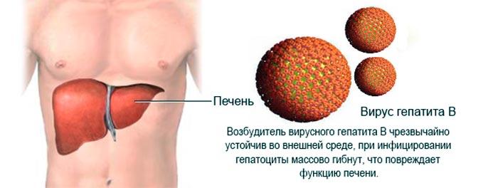 Гепатит С одно из распространенных инфекционных заболеваний поражающих печень