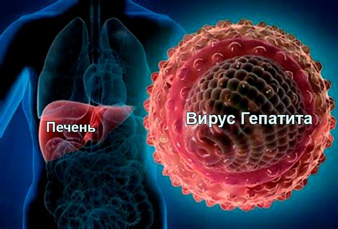 Гепатит печень сколько живут
