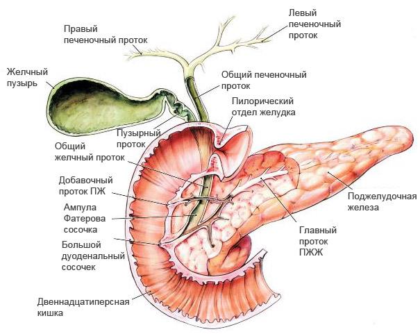 Симптомы и лечение кисты поджелудочной железы