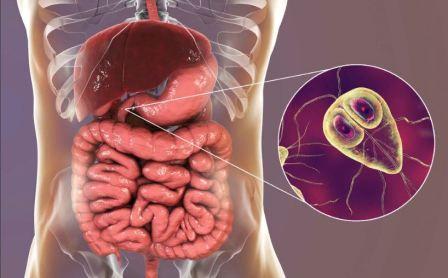 Паразиты в печени человека: симптомы и лечение