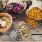 Лекарственные травы и сборы для лечения гепатита С